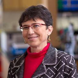 Grace M Aldrovandi, MD Pediatrics